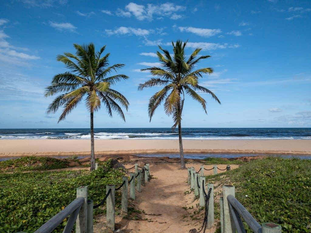 Palm trees on a beach in Imbassaí, Brazil